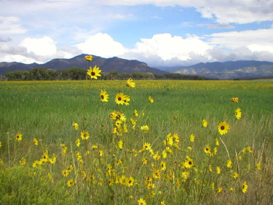 Colorado Mountain Land For Sale